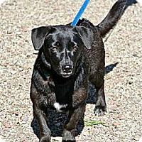 Adopt A Pet :: Onyx - Hastings, NY