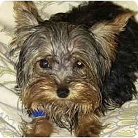 Adopt A Pet :: Olivia - West Palm Beach, FL
