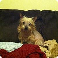 Adopt A Pet :: Elsa - Mt Gretna, PA