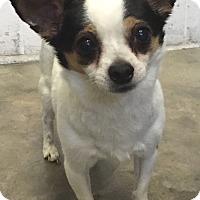 Adopt A Pet :: Bandit - geneva, FL
