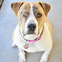Adopt A Pet :: Ninja - Acton, CA