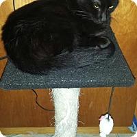 Adopt A Pet :: Freeway the 3 Legged Lovebug - McDonough, GA