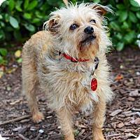 Adopt A Pet :: Tammy - San Jose, CA