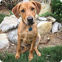 Adopt A Pet :: Dan - Fredericksburg, TX