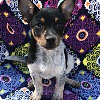 Adopt A Pet :: Winnie - East Hartford, CT
