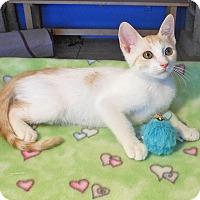 Adopt A Pet :: Chase - Glendale, AZ