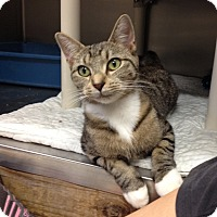 Adopt A Pet :: B-3 - Triadelphia, WV