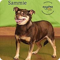 Adopt A Pet :: Sammie - Topeka, KS