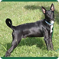 Adopt A Pet :: Greyson - South Bend, IN
