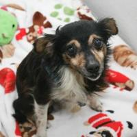 Adopt A Pet :: Ted (longer haired) - Bowling Green, KY