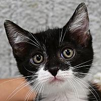 Adopt A Pet :: Tony - Huntley, IL