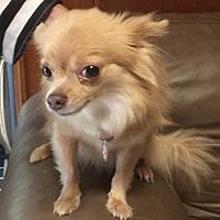 Adopt A Pet :: Charlie - Savannah, GA