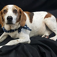 Adopt A Pet :: BANNER - Sterling, MA