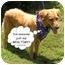 Photo 2 - Golden Retriever Dog for adoption in Bourg, Louisiana - Savannah