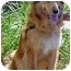 Photo 4 - Collie Mix Dog for adoption in Spring Valley, California - Holly