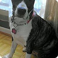 Adopt A Pet :: Athena - Bloomingdale, GA