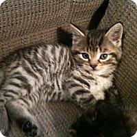 Adopt A Pet :: Toby - Toronto, ON