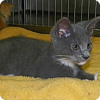 Adopt A Pet :: Froman - Dover, OH