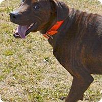 Adopt A Pet :: Jake - Bakersville, NC