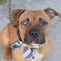 Adopt A Pet :: MEGAN DRAPER - New York, NY