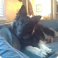 Adopt A Pet :: Maxine - Fayette City, PA