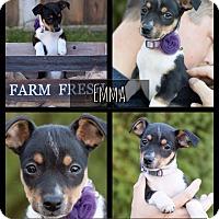 Adopt A Pet :: Emma - West Richland, WA