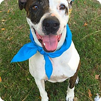 Adopt A Pet :: Vegas - Los Angeles, CA