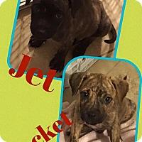 Adopt A Pet :: Jet - Scottsdale, AZ