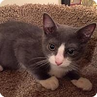 Adopt A Pet :: Anna - East Hanover, NJ