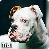 Adopt A Pet :: Trish - Encino, CA