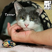 Adopt A Pet :: Tanner - Albuquerque, NM