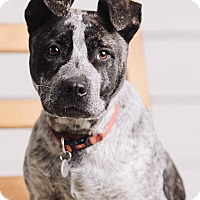 Adopt A Pet :: Tugg - Portland, OR