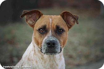 Australian Cattle Dog Mix Dog for adoption in Wichita, Kansas - Ginger