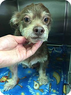 Adopt A Pet :: Bodhi  - Renton, WA