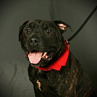 Adopt A Pet :: Buster - Toms River, NJ
