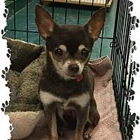 Adopt A Pet :: Pookie - Fallston, MD