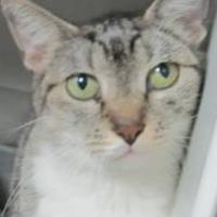 Adopt A Pet :: tabitha - Robinson, IL