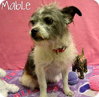 Terrier (Unknown Type, Small) Mix Dog for adoption in Laplace, Louisiana - Mable