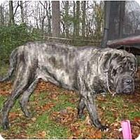 Adopt A Pet :: Apollo Creed - Asheboro, NC