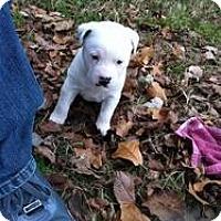 Adopt A Pet :: Gooch - Blanchard, OK