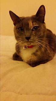 Calico Cat for adoption in Monrovia, California - Grace