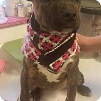 Adopt A Pet :: Cece - Pompton Lakes, NJ