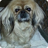 Adopt A Pet :: Tessa - Greeley, CO