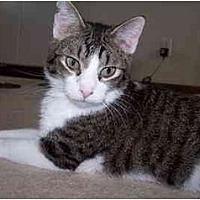 Adopt A Pet :: Jesse - Sheboygan, WI