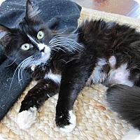 Adopt A Pet :: Mamacita - Orange, CA