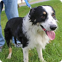 Adopt A Pet :: Gelert - Washington, DC