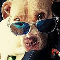 Adopt A Pet :: Sonny - Augusta, GA