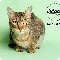 Adopt A Pet :: Leonardo - Pearland, TX