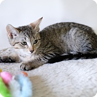 Adopt A Pet :: Watson - Staten Island, NY