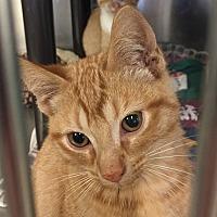 Adopt A Pet :: Dan - Jackson, MI